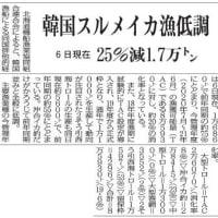 2020年11月19日みなと新聞  韓国スルメイカ漁低調