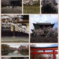 桜2016 @京都東山界隈