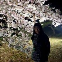 「夜桜●●」