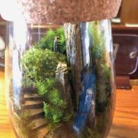 『苔』の世界へようこそ