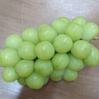 葡萄の季節。