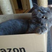お猫さま御用達 Amazonの箱。vol.2