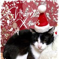 メリークリスマスなのです〜!