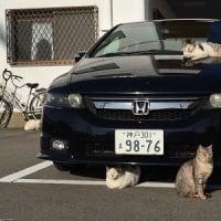 駐車場で日向ぼっこする地域猫ちゃんたち