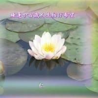 フォト旅日記zqt2201『 睡蓮 』