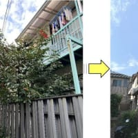 お隣にご迷惑かけている柿の木枝おろし作業