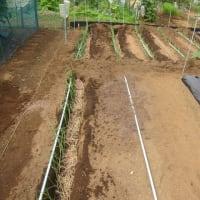 湘南農園 ネギの植付け完了です。