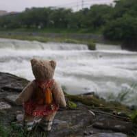 梅雨前線による大雨が続く京都。鴨川へと合流する高野川も水かさを増し、飛び石の亀も水没