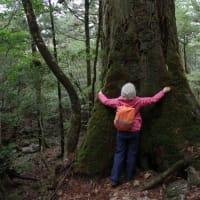 閑散期なので静寂な森を楽しめます【屋久島白谷雲水峡ガイドツアー】