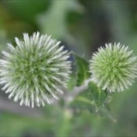 庭の花 (No 2053)