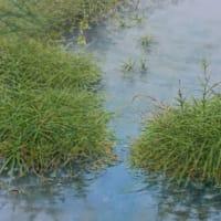 水彩お絵描き思い出めくり№220「春の小川」