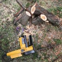 小刻みに枝を切って処分