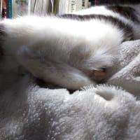 枕の上のぷりけつ、めんま。