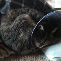 我が家のねこちゃん寝顔集(その4)丸くなって寝る編