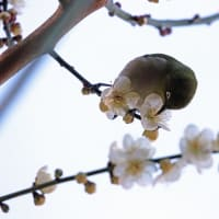 鶴見緑地 ブラブラ~フォト ウメジロ・百舌鳥編