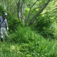 山の下草刈り(草,笹,灌木,枯れ枝,侵入竹など)