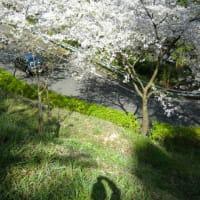 桜の園~その1