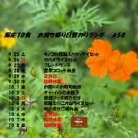 9/25~10/8日替お持ち帰りランチのお知らせ