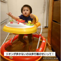 米なすのくろわし初収穫♪リオンの歩行器封印(⊙_⊙)