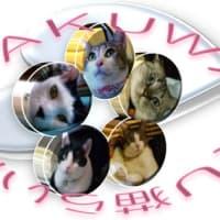 MIXシャム+キジ白+白黒猫ボタン●ママちゃん、チャッピちゃん、チェ・ジウちゃん、クロくん、ブチくん
