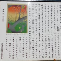 藤が見頃というので亀戸天神及び周辺の歴史を歩いた--東京の旅⑩