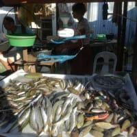 語学留学でセブに行く20 週末の散歩1 闇市へ-セブの魚