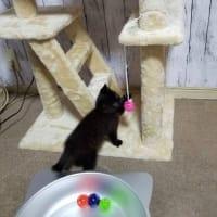 黒猫ちゃん、幸せ便り