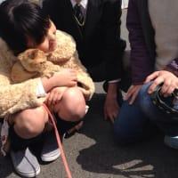 保護猫の茶トラ通信