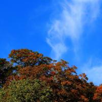 白山登山口「別当出会い」の秋