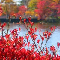 晩秋の八ヶ岳西麓・・・蓼科湖の紅葉