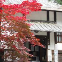 2020京都の紅葉 梨木神社、廬山寺散り真っ最中