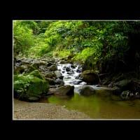 近所の渓流