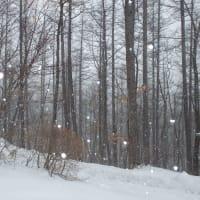 雪降りの日にオジロワシ
