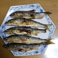 中津川に出撃 part2