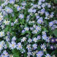 夏の花撮ってみました