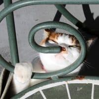 ローズヒップください猫