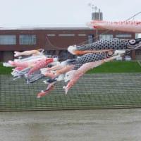 本日!第16回こいのぼりフェスタティバル開催のご案内!