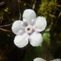 最近見た色違いの花