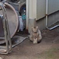 子猫2匹保護しました
