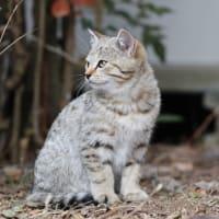 今年生まれた子猫