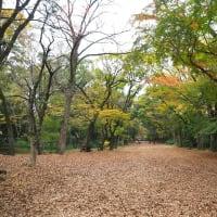 2020京都の紅葉 下鴨神社色づきはじめ