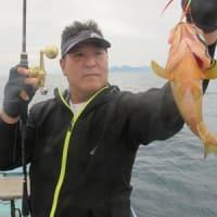 6/18(金)一升瓶サイズのマイカにスルメイカにと好調にヒット!!赤物はアコウにウッカリカサゴに鬼カサゴと(*^^*)ノ