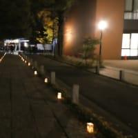 千本公孫樹をライトアップ『煌 kirameki 2020』が11月28.29日に開催@葛飾八幡宮
