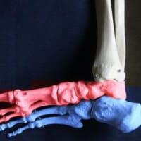 足の細分化