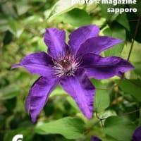 6/8 庭の花 札幌写真館ハレノヒ