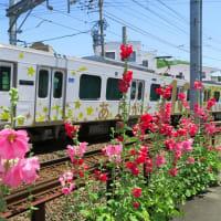 静岡鉄道は100周年ラッピング車A3006とタチアオイ (2019年6月 音羽町-日吉町)