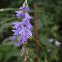 梅雨時期の花たち