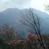 石鎚山ハイキング(曙ツツジ観察)