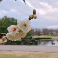 ウォーキング:鳥屋野潟スポーツ公園