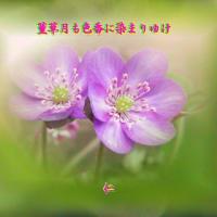 『 菫草月も色香に染まりゆけ 』良寛さんとあそぶyyt0601